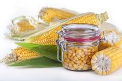 罐装玉米 免版税库存照片