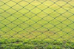 滤网和草 库存照片