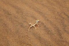 网状沙漠的蜥蜴 免版税图库摄影