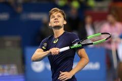 网球员大卫・高芬 库存照片