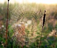 网由一只蜘蛛编织了以一个螺旋的形式在夏天草甸的 免版税库存图片