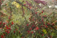 网的样式在庭院里 库存图片