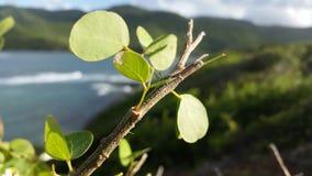 罕见的加勒比植物 免版税库存图片
