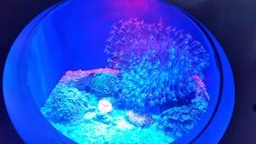 罕见的海生物 库存图片