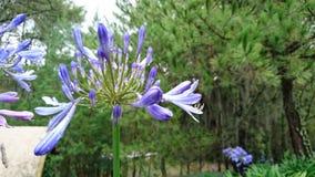 罕见的紫罗兰色花 免版税图库摄影
