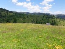 罕见的花丰富的干草草甸在Gyimes,特兰西瓦尼亚 免版税库存图片