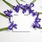 紫罗兰使xiphium球茎虹膜,在白色背景的虹膜sibirica现虹彩与文本的空间 顶视图,平的位置 免版税库存照片