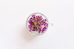 紫罗兰小芬芳森林花在一个玻璃杯子的在白色背景 免版税库存图片