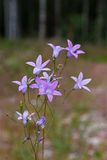 紫罗兰色会开蓝色钟形花的草花、草和树在背景中 库存图片