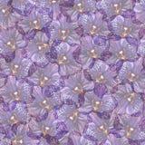 紫罗兰色兰花植物兰花花无缝的样式纹理 免版税库存照片