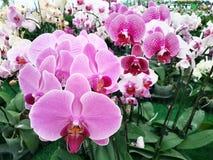 紫罗兰色兰花植物 库存照片
