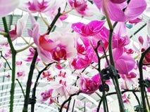 紫罗兰色兰花植物 免版税图库摄影