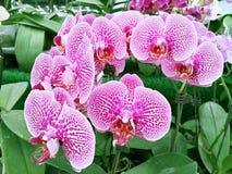 紫罗兰色兰花植物 免版税库存图片
