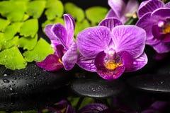 紫罗兰色兰花(兰花植物),绿色分支温泉静物画  免版税库存照片