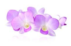 紫罗兰色兰花 库存图片