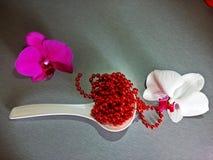 紫罗兰色和白色兰花 免版税库存图片