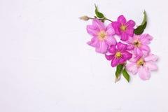 紫罗兰色夏天铁线莲属在灰色织地不很细背景开花 免版税库存照片