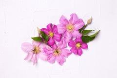 紫罗兰色夏天铁线莲属在灰色织地不很细背景开花 免版税图库摄影