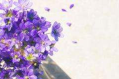 紫罗兰色春天开花与拷贝空间的背景 库存照片