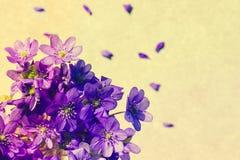 紫罗兰色春天开花与拷贝空间的背景 免版税库存图片
