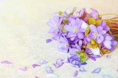 紫罗兰色春天开花与拷贝空间的背景 免版税图库摄影