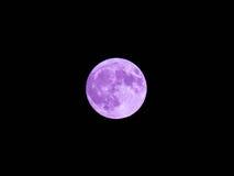 紫罗兰色月亮 库存图片