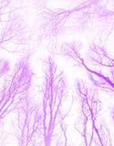 紫罗兰色树荫摘要样式设计 免版税库存图片