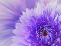 紫罗兰色桃红色被弄脏的背景 在被弄脏的背景的花大丽花 所有所有构成要素花卉例证各自的对象称范围纹理导航 节假日的看板卡 免版税图库摄影