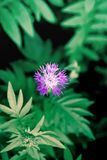 紫罗兰色森林花 免版税图库摄影