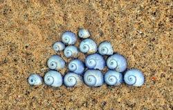 紫罗兰色海洋蜗牛轰击Janthina janthina 库存照片