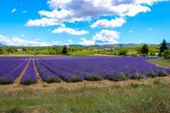 紫罗兰色熏衣草属风景 免版税库存图片
