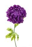 紫罗兰色牡丹人造花 库存图片