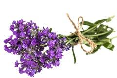紫罗兰色狂放的淡紫色花花束,栓与弓,被隔绝 免版税库存图片