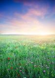 紫罗兰色花春天草甸。 免版税库存照片