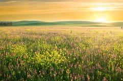 紫罗兰色花春天草甸。 库存照片