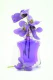 紫罗兰色花 库存照片