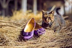 紫罗兰色鞋子和猫 免版税库存照片