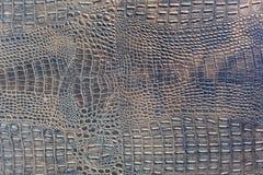 紫罗兰被察觉的鳄鱼皮革背景 免版税库存照片
