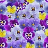紫罗兰蝴蝶花的无缝的样式 免版税库存照片