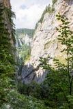 罗多彼州山的峡谷,非常长满与落叶和常青森林 免版税库存图片