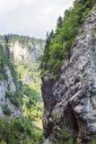 罗多彼州山的峡谷,非常长满与落叶和常青森林 库存照片