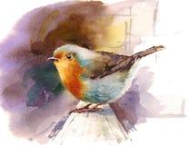 罗宾水彩手画鸟的例证 免版税图库摄影