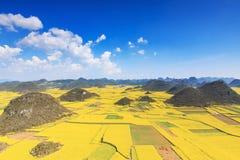 罗平油菜籽花在云南中国 免版税库存照片
