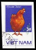 罗德Isian鸡,系列鸡品种,大约1985年 免版税库存照片