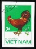 罗德Ri雄鸡,从系列鸡品种,大约1986年 免版税库存照片