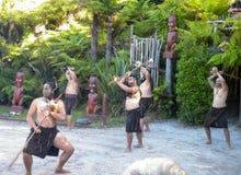 罗托路亚,新西兰- 2014年12月-毛利人战士执行哈加舞蹈 库存图片