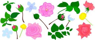 罗斯、白色和伯根地红色牡丹、普罗梯亚木、紫罗兰色兰花、八仙花属、风轮草季节性植物和草本的花和混合 向量例证