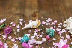 罗斯和巧克力精炼机壳,珊瑚形成在桌面背景中 免版税库存照片