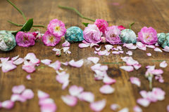 罗斯和巧克力精炼机壳,珊瑚形成在桌面背景中 免版税库存图片