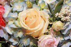 罗斯在花背景中 库存图片